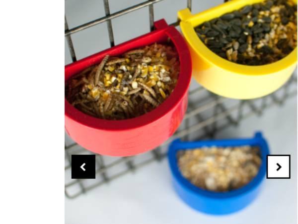 Birds For Sale in Danville California Classifieds Craigslist Ads